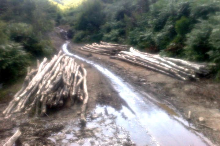Foto nga prerjet e paligjshme e pyjeve në Kosovë, raportuar në KALLXO.com