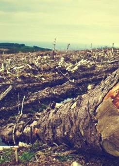 Shpyllëzimi është problem serioz për vendet në zhvillim si Kosova | Foto: Pixabay