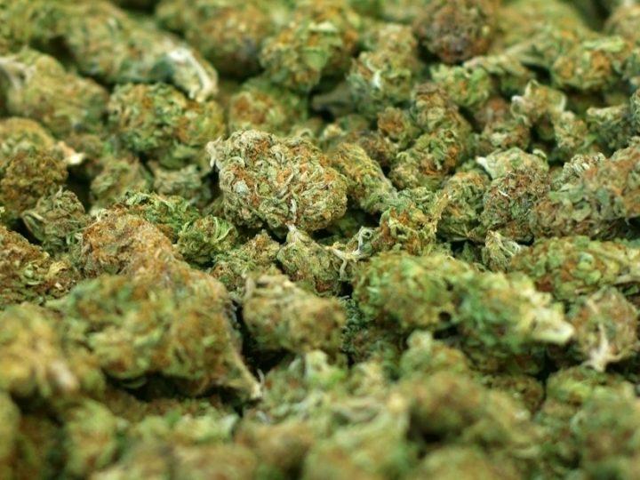 Marijuana_364736_51614