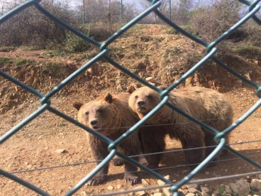 Një ari në qendrën e përkujdesit të kafshëve në Prishtinë. Foto: BIRN